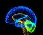 активация мозга и как начать своё дело
